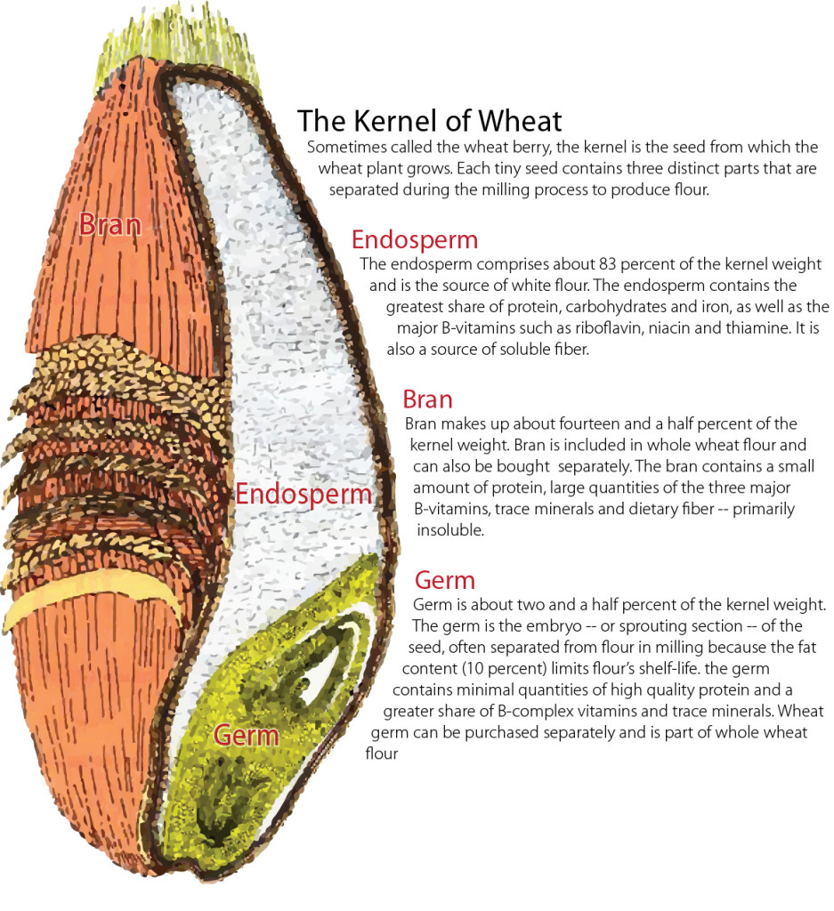 Illustration of a Kernel of Wheat